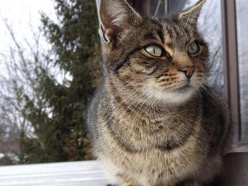 Kitten Cat Animal Cute Domestic Cat
