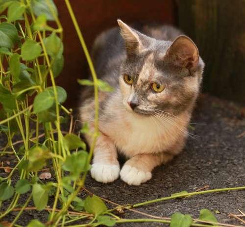 Kitten Hiding Foliage Cute Feline Animal Curious