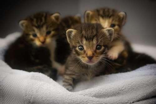 Kittens Cats Feline Animals Macro Closeup Cute