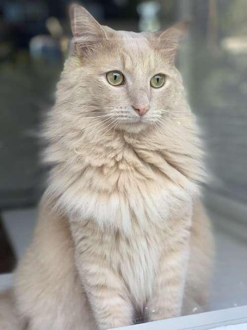 Kitty Window Animal Kitten Cute Looking White