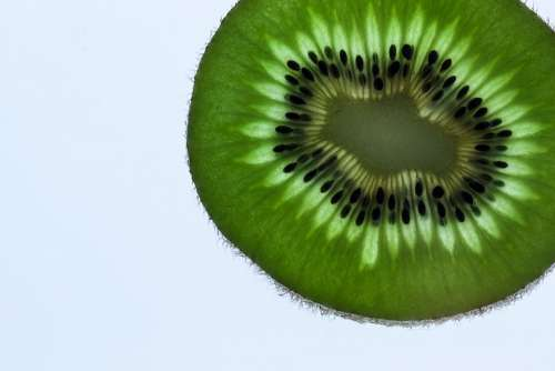 Kiwi Fruit Disc Green Fresh Transmitted Light