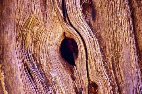 Knothole In Utah Juniper Juniper Wood Nature Tree