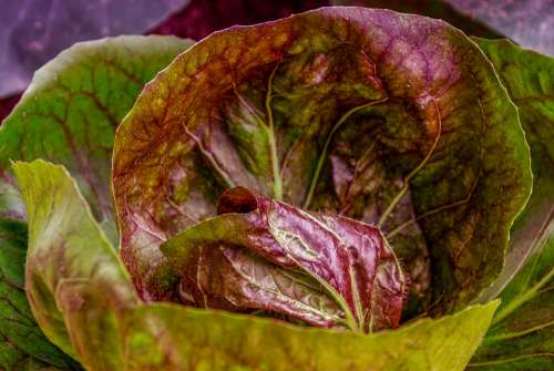 Kohl Cabbage Cabbage Leaves Food Healthy Smooth