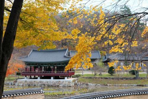 Korea Temple Autumn Maple Tree Travel Section