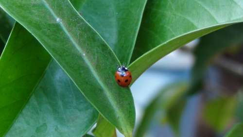 Ladybug Garden Nature Insect Leaf Red Green