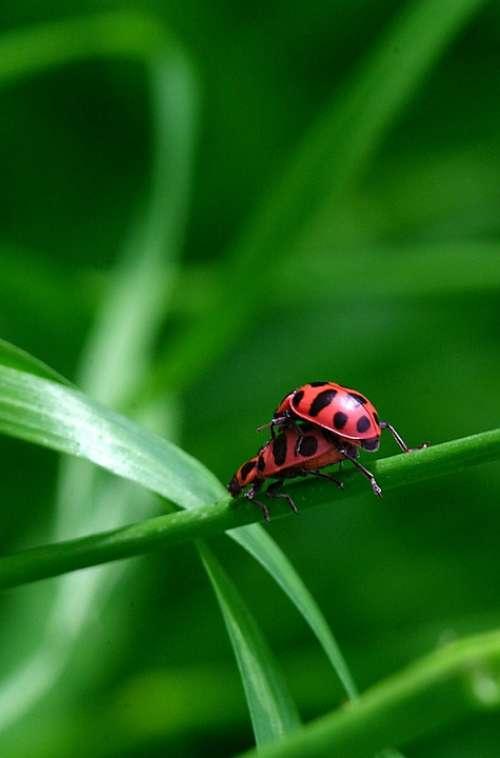 Ladybug Coupling Macro