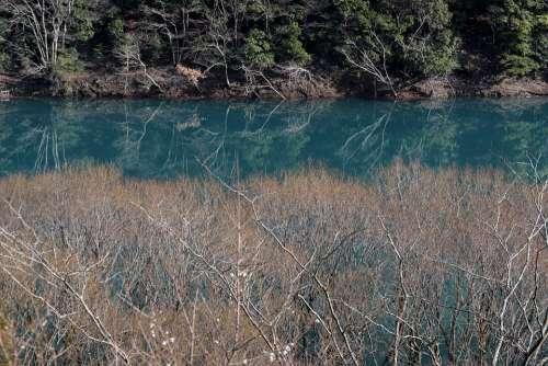 Lake Water Natural Blue Plant Lakeside