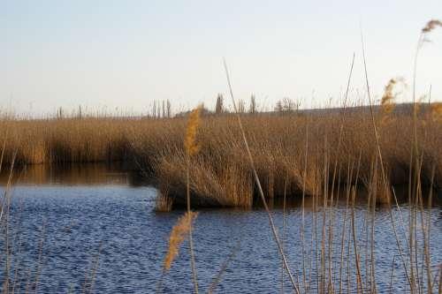 Lake Reed Water Wave Waters