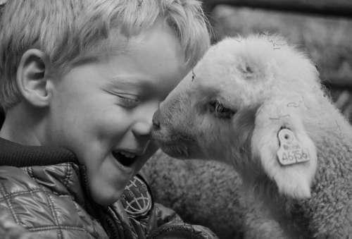 Lamb Child Sheep Animal Nature Cute Easter Young