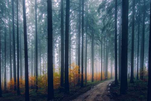 Landscape Scenic Fall Autumn Forest Trees Woods