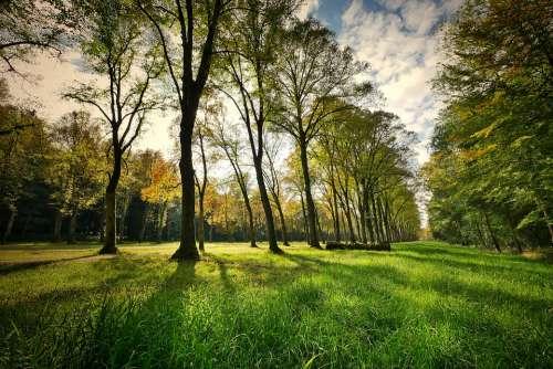Landscape Trees Park Nature Grass Backlighting