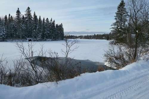 Landscape Winter Nature Snow Cold Gel Trees Fir