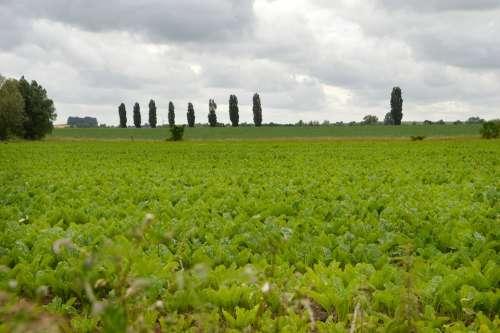 Landscape Field Nature Agriculture Summer