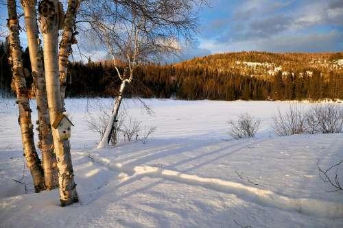 Landscape Winter Nature Trees Birch Mountain Cold