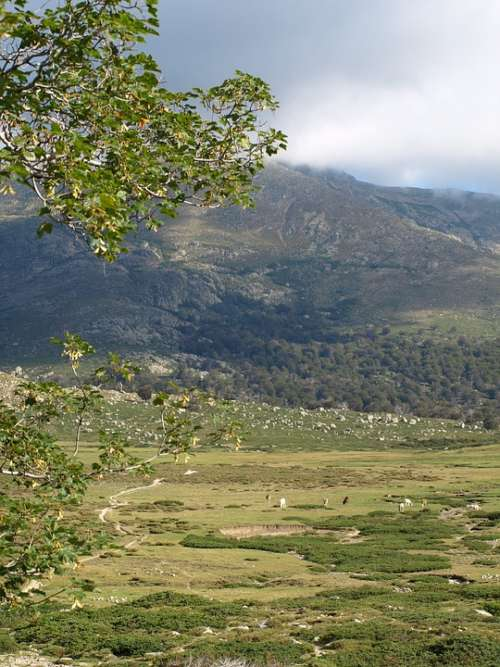 Landscape Plateau Valley Pasture Corsica Nature