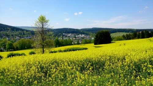Landscape Nature Summer Meadow