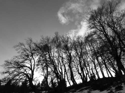 Landscapes Nature Trees Contrast Light And Shade
