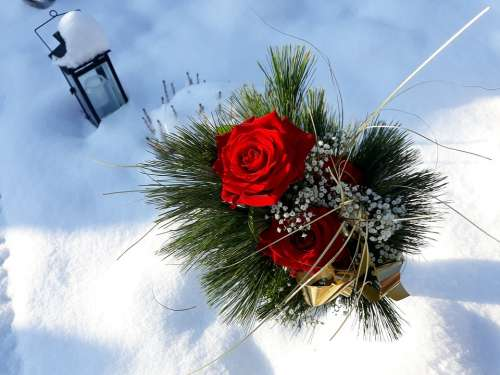 Lantern Snow Christmas Christmas Images Rose Red