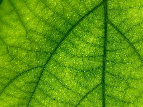 Leaf Green Macro Texture Patten Closeup
