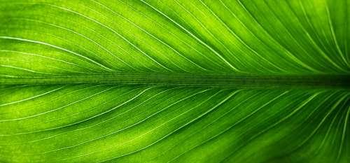 Leaf Nature Green Plants Veins Translucent