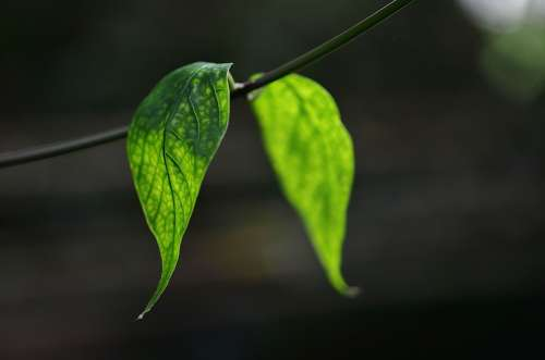 Leaf Leaves Colorful Green Macro Nature