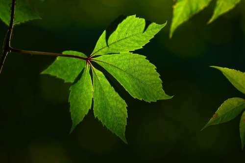 Leaf Vein Pattern Greenery Environment Eco