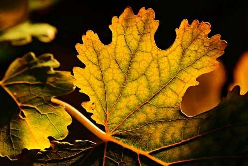 Leaf Autumn Colors Vein Pattern Structure Twig