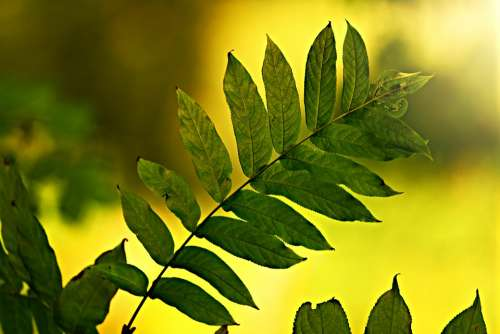 Leaf Twig Vein Pattern Branch Bush Back Light