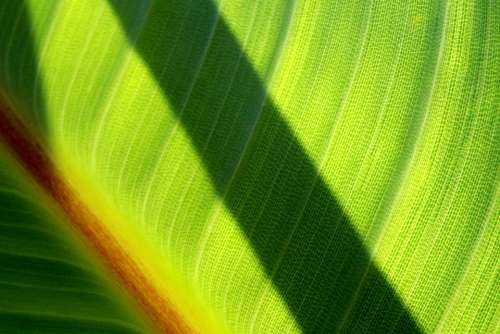 Leaf Shadow Forest Leaves Nature Green Trees