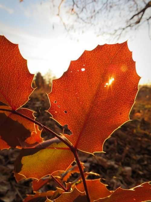 Leaf Foliage Leaf Leaves Autumn Autumn Leaf