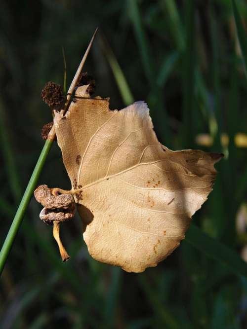 Leaf Dry Leaf Autumn Float Autumn Leaves