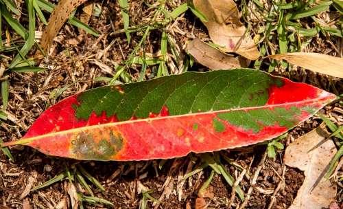 Leaf Forest Rain Forest Floor Red Green Fallen