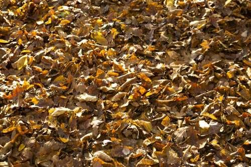 Leafs Autumn Croatia Nature Park Natural Outdoors