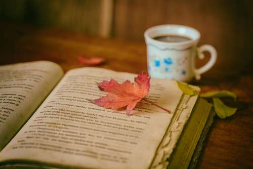 Leaves Books Color Coffee Cup Still Life Book