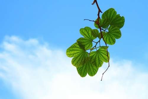 Leaves Sky Blue Cloud Green Harmony Leaf Lush