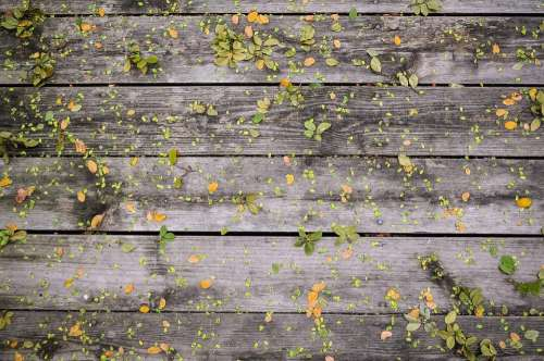 Leaves Wooden Boards Wood Wall Background Natural