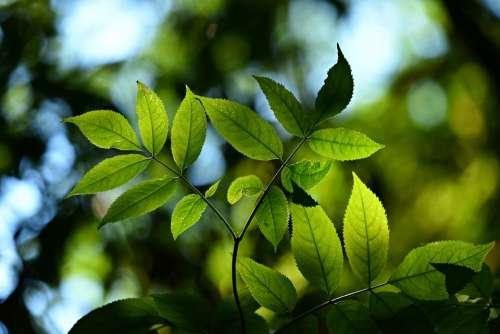 Leaves Foliage Twig Back Lighting Bokeh Shape