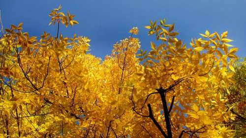 Leaves Trees Crown Autumn Yellow Landscape Tree