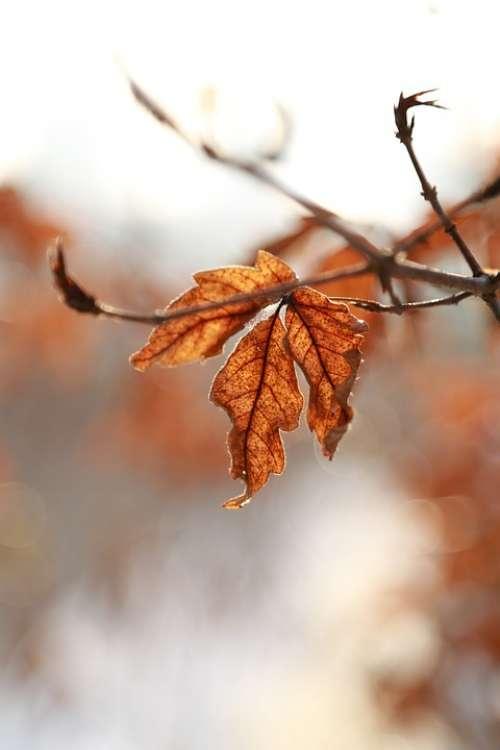 Leaves Leaf Autumn The Leaves Autumn Leaves Brown