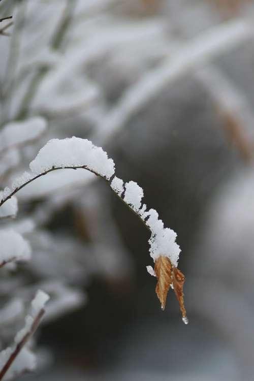 Leaves Wood Eggplant Snow Ice Winter Nature Twig