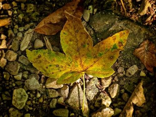 Leaves Leaf Autumn Light Shadow Autumn Colours