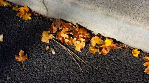 Leaves Blacktop Curb Asphalt Road Autumn Leaf