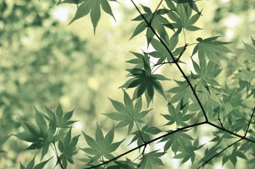 Leaves Tree Botany Plant Flora Foliage Branch