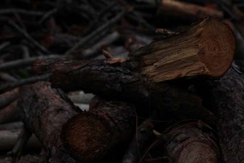 Lena Wood Texture Fire Flame Embers Fireplace