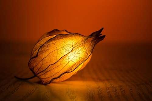 Light Glow Leaf Exotic Warm Art Backlit