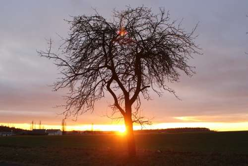 Light Tree West Sun Colors Evening Landscape