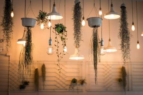 Lights Decoration Depth Of Field Hanging