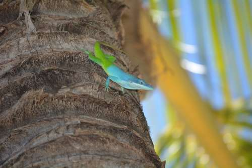 Lizard Palm Colorful Reptile Exotic Nature