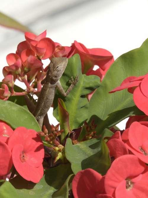 Lizard Flowers Animal Nature Reptile Garden Plant