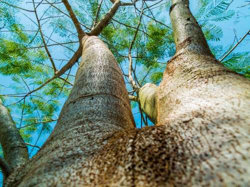 Log Tree Bark Aesthetic Forest High